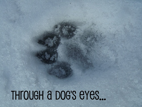 Divine Inspiration | Through a Dog's Eyes